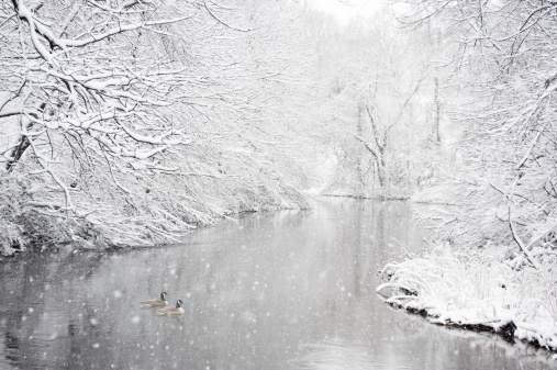 River「Two geese in a river during snowstorm」:スマホ壁紙(9)