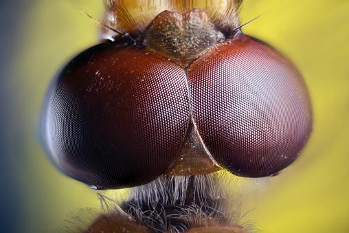 とんぼ「Dragonfly compound eye」:スマホ壁紙(10)