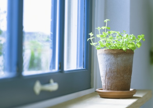 Natural Condition「Lysimachia nearby the window」:スマホ壁紙(10)
