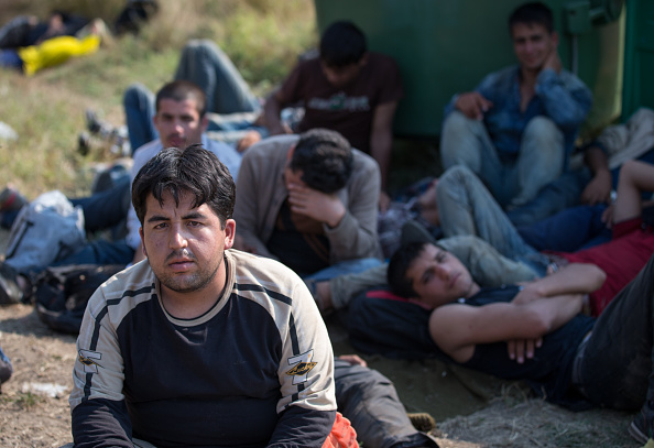 Land Vehicle「Hungary Builds Migrant Fence On Its Border With Serbia」:写真・画像(17)[壁紙.com]
