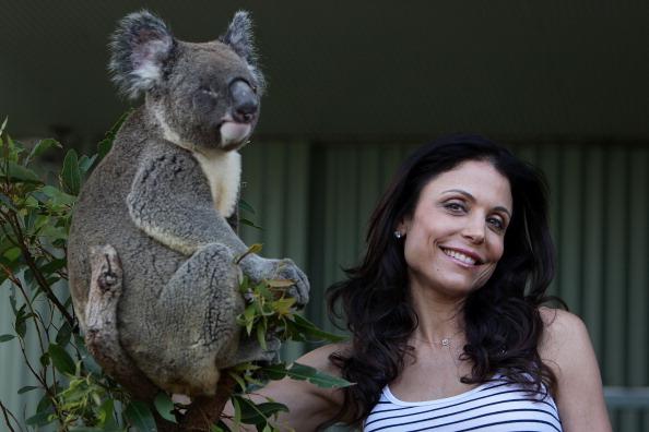 Koala「Bethenny Frankel Visits WILD LIFE Sydney」:写真・画像(19)[壁紙.com]
