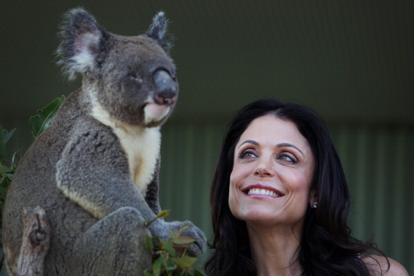 Koala「Bethenny Frankel Visits WILD LIFE Sydney」:写真・画像(11)[壁紙.com]