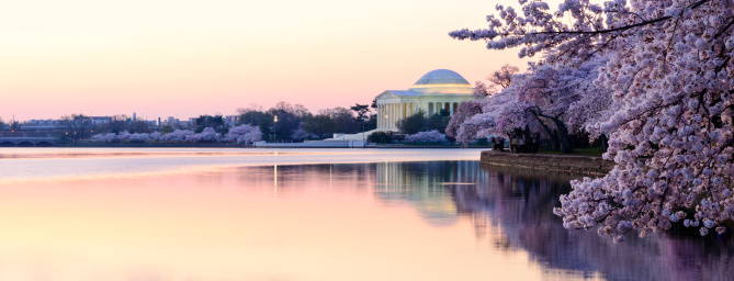 Cherry Blossoms「Panoramic of Thomas Jefferson Memorial in the early morning」:スマホ壁紙(8)