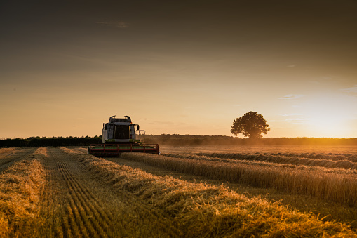 Norfolk - England「Combine Harvester cutting cereal at sunset Norfolk」:スマホ壁紙(9)