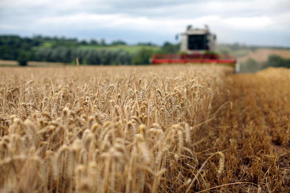 Wheat「Global Grain Prices Set To Soar Amid Fears Of Wheat Shrotage Due To Drought」:写真・画像(0)[壁紙.com]