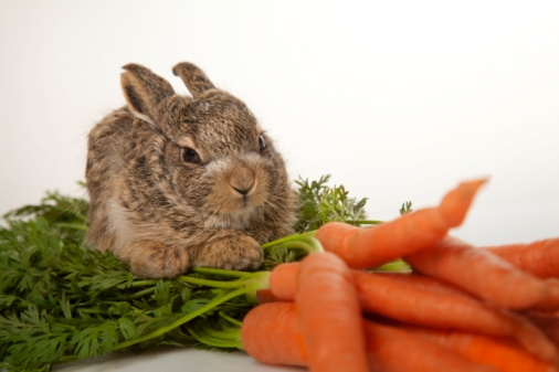 Baby Rabbit「Baby rabbit with carrots」:スマホ壁紙(4)