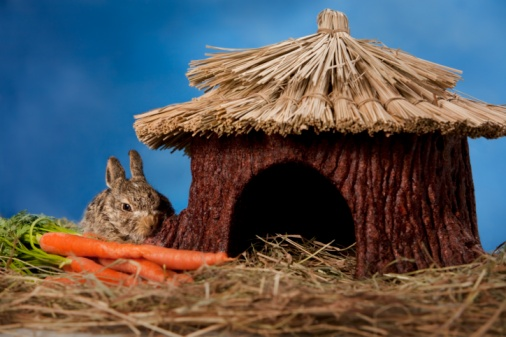 Baby Rabbit「Baby rabbit with carrots beside hut」:スマホ壁紙(10)