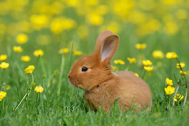 Baby rabbit in meadow:スマホ壁紙(壁紙.com)