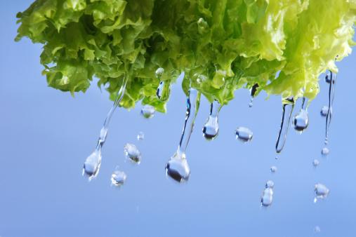 Blue Background「Washing the Lettuce」:スマホ壁紙(2)