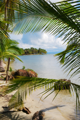 Frond「Beach scene framed by palm fronds in Bocas del Toro」:スマホ壁紙(1)