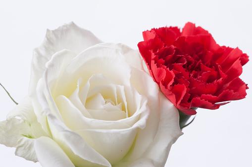 カーネーション「Carnation and white rose」:スマホ壁紙(7)