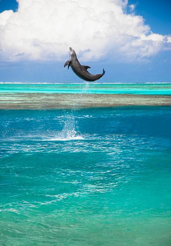 イルカ「なドルフィンジャンプ」:スマホ壁紙(16)