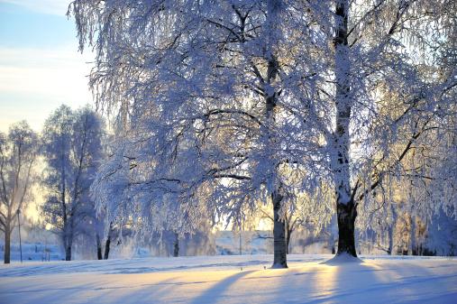 雪「雪で覆われた木とフロスト」:スマホ壁紙(2)