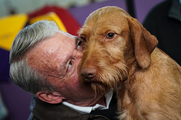 Affectionate「Annual Westminster Dog Show Takes Place In New York City」:写真・画像(13)[壁紙.com]