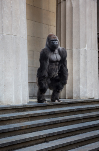 Gorilla「Gorilla on steps of building」:スマホ壁紙(10)