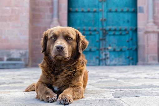 Resting「Peru, Cusco, stray dog」:スマホ壁紙(4)