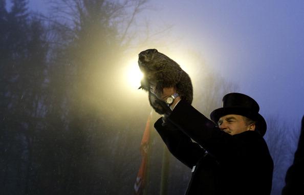 Shadow「Punxsutawney Phil Makes Annual Forecast On Groundhog Day」:写真・画像(16)[壁紙.com]