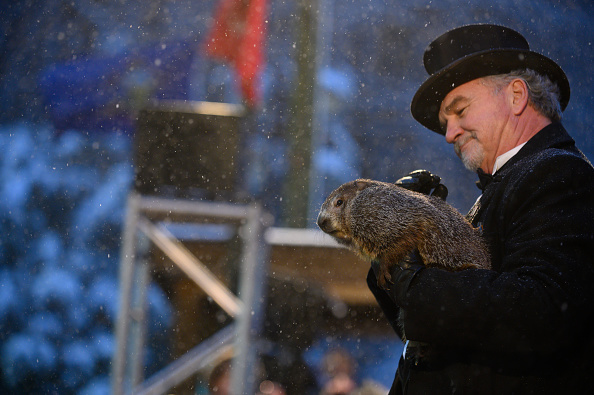 Shadow「Winter Weather Oracle Punxsutawney Phil Makes Annual Groundhogs Day Appearance」:写真・画像(14)[壁紙.com]
