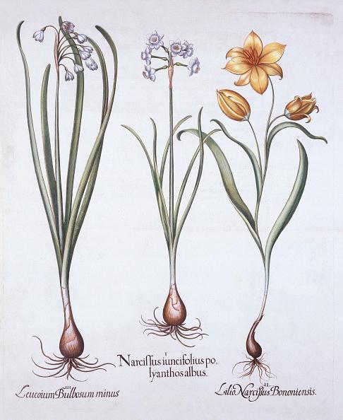 結晶「Narcissus」:写真・画像(0)[壁紙.com]