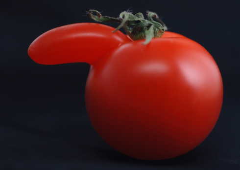 Human Nose「tomato with nose」:スマホ壁紙(9)