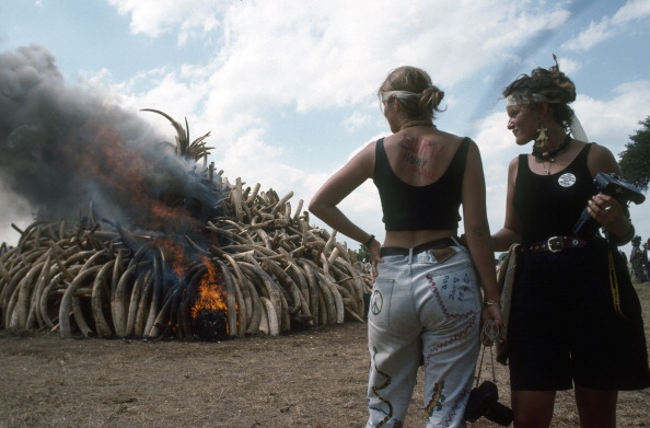 Teenager「Burning Confiscated Ivory」:写真・画像(2)[壁紙.com]