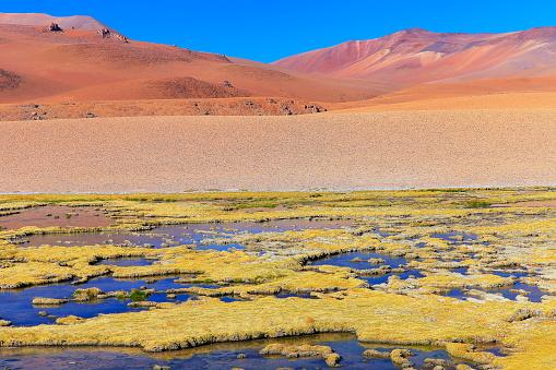 Bolivian Andes「Lakeshore pond and marsh in Atacama Desert Volcanic landscape –  Chile」:スマホ壁紙(13)