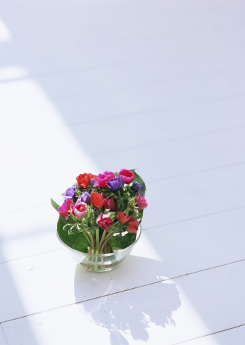 flower「Anemone」:スマホ壁紙(17)