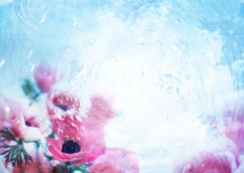 Rippled「Anemone」:スマホ壁紙(6)