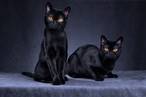 black cat「Black cats」:スマホ壁紙(6)