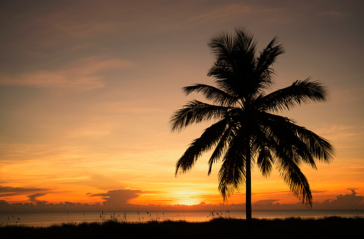 Miami Beach「Coconut palm on a beach at sunrise」:スマホ壁紙(0)