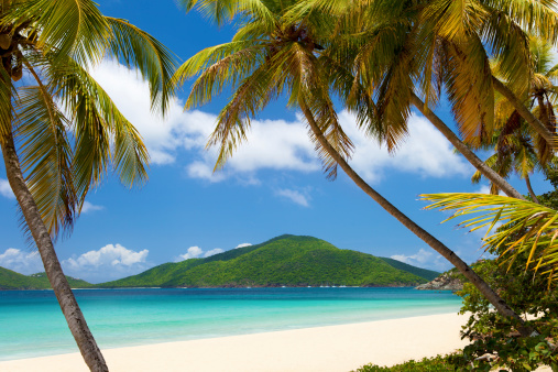 Island「coconut palm trees at a tropical beach in Virgin Islands」:スマホ壁紙(13)