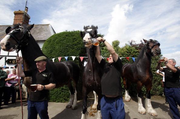 Crockery「Wadworths Brewery Shire Horses Start Their Annual Fortnight Holiday」:写真・画像(16)[壁紙.com]