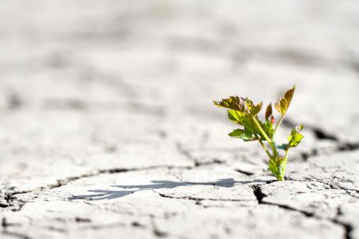 Deforestation「new life - fresh plant in desert」:スマホ壁紙(8)