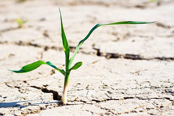 new life - fresh plant in desert:スマホ壁紙(壁紙.com)
