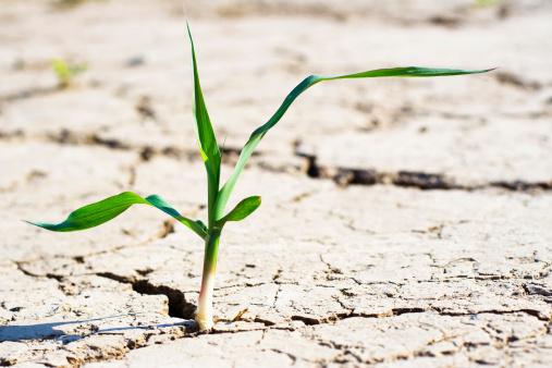 Deforestation「new life - fresh plant in desert」:スマホ壁紙(16)