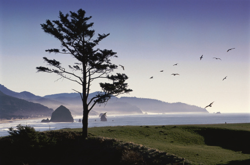 Cannon Beach「Cannon Beach, Oregon」:スマホ壁紙(12)