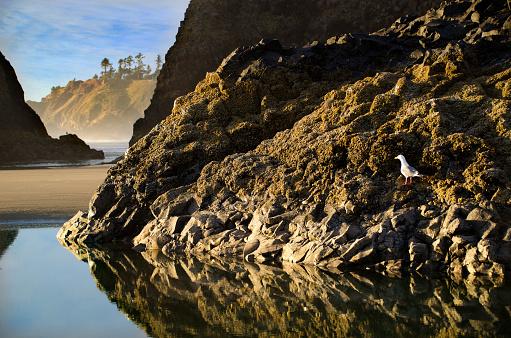 Cannon Beach「Cannon Beach Scenic Beauty」:スマホ壁紙(8)