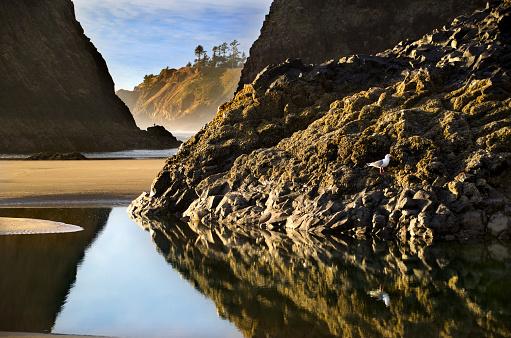 Cannon Beach「Cannon Beach Scenic Beauty」:スマホ壁紙(0)