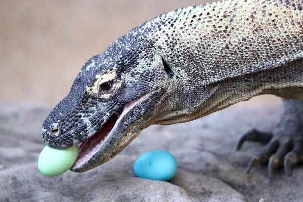 Animals Enjoy Easter Treats At Taronga Zoo:ニュース(壁紙.com)