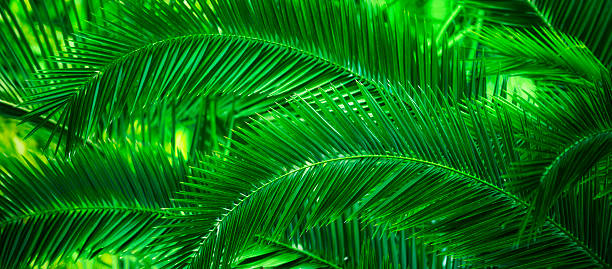 Jamaica, Palm leaves:スマホ壁紙(壁紙.com)