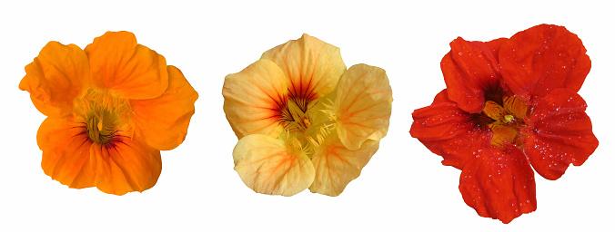 Creeper Plant「Three flower heads」:スマホ壁紙(7)