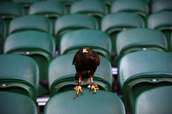 Carl Court「Wimbledon Tennis Championship - Day Four」:写真・画像(4)[壁紙.com]