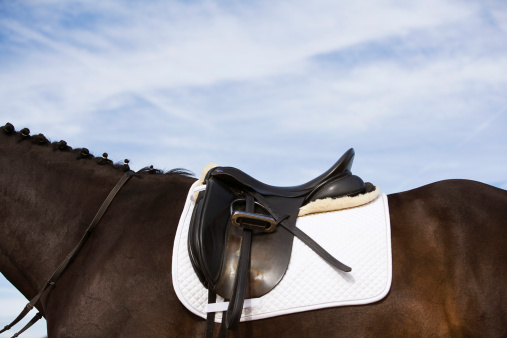 Horse「side view of saddled horse」:スマホ壁紙(5)