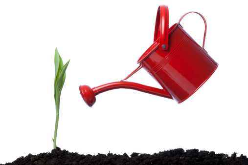 チューリップ「サイドの赤いじょうろ緑の植物の壁」:スマホ壁紙(14)