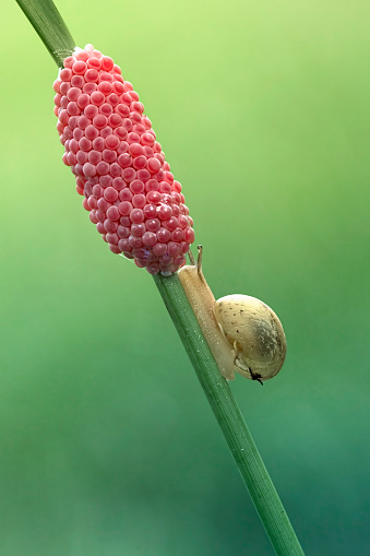 snails「Side view of a snail crawling up a plant」:スマホ壁紙(10)