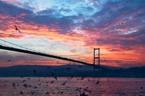 Turkey - Bird「Bosphorus Bridge at sunrise.」:スマホ壁紙(13)