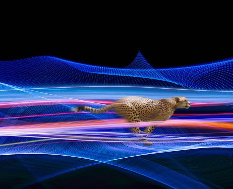 Cloud Computing「Cheetah Fast Streaming Data」:スマホ壁紙(1)