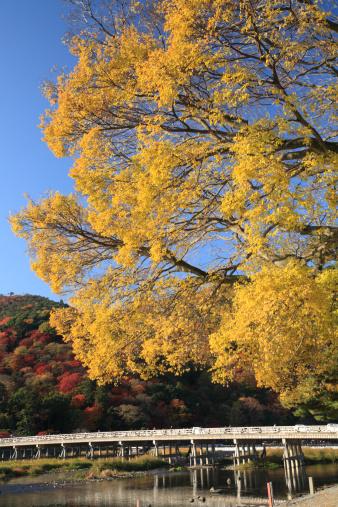 秋+京都「Yellow Leaves and Togetsu Bridge at Arashiyama, Kyoto, Kyoto, Japan」:スマホ壁紙(6)