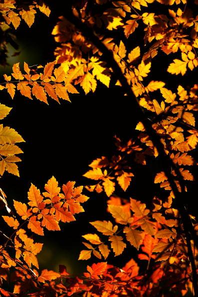 Leaf「Autumn Scenery In Beijing」:写真・画像(15)[壁紙.com]