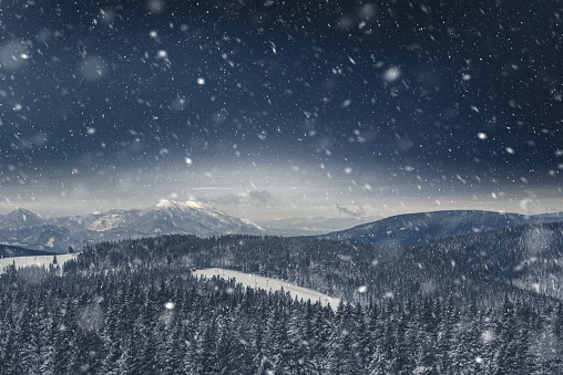 Slovenia「Pine Forest Covered With Snow」:スマホ壁紙(9)